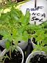 Plants Names DX7 162