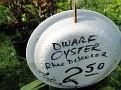 Plants Names DX7 195
