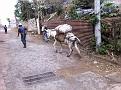 Village Life Alotenango, Guatemala.