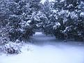 Snow Storm 1-30-2010 (2)