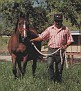 ALEGORIA #126746 (Czort x Algonkina, by *Pietuszok) 1970 bay mare bred by Michalow; imported to the US 1974 by Hitching Post Farm & MPM Rentals. Produced 14 registered purebreds in the US.