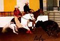 -HIA LEHADD #368557 (Ahadd x JM Sit Elkul, by TheEgyptianPrince) 1986 grey SE stallion bred by Norman & Sharon Smith