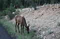 Grand Canyon Wildlife (4)