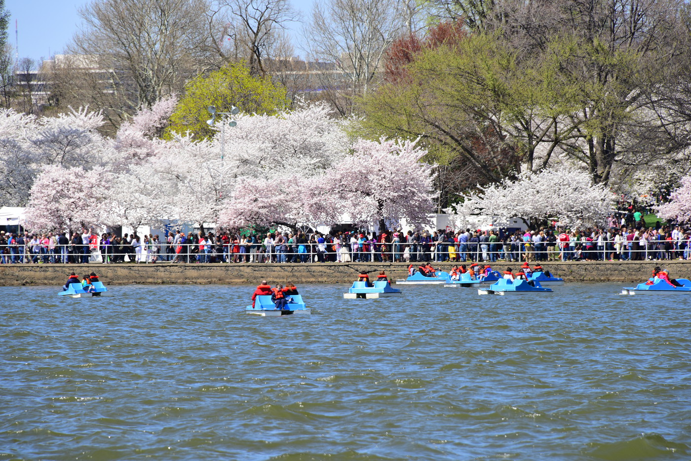 CherryBlossomFest APR2015 470