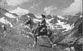 SAHAR #1837 (Kabar x Sahalli) 1940 chestnut stallion bred by Wayne Van Vleet/ Van Vleet Arabian Stud
