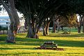 Foreshore Park
