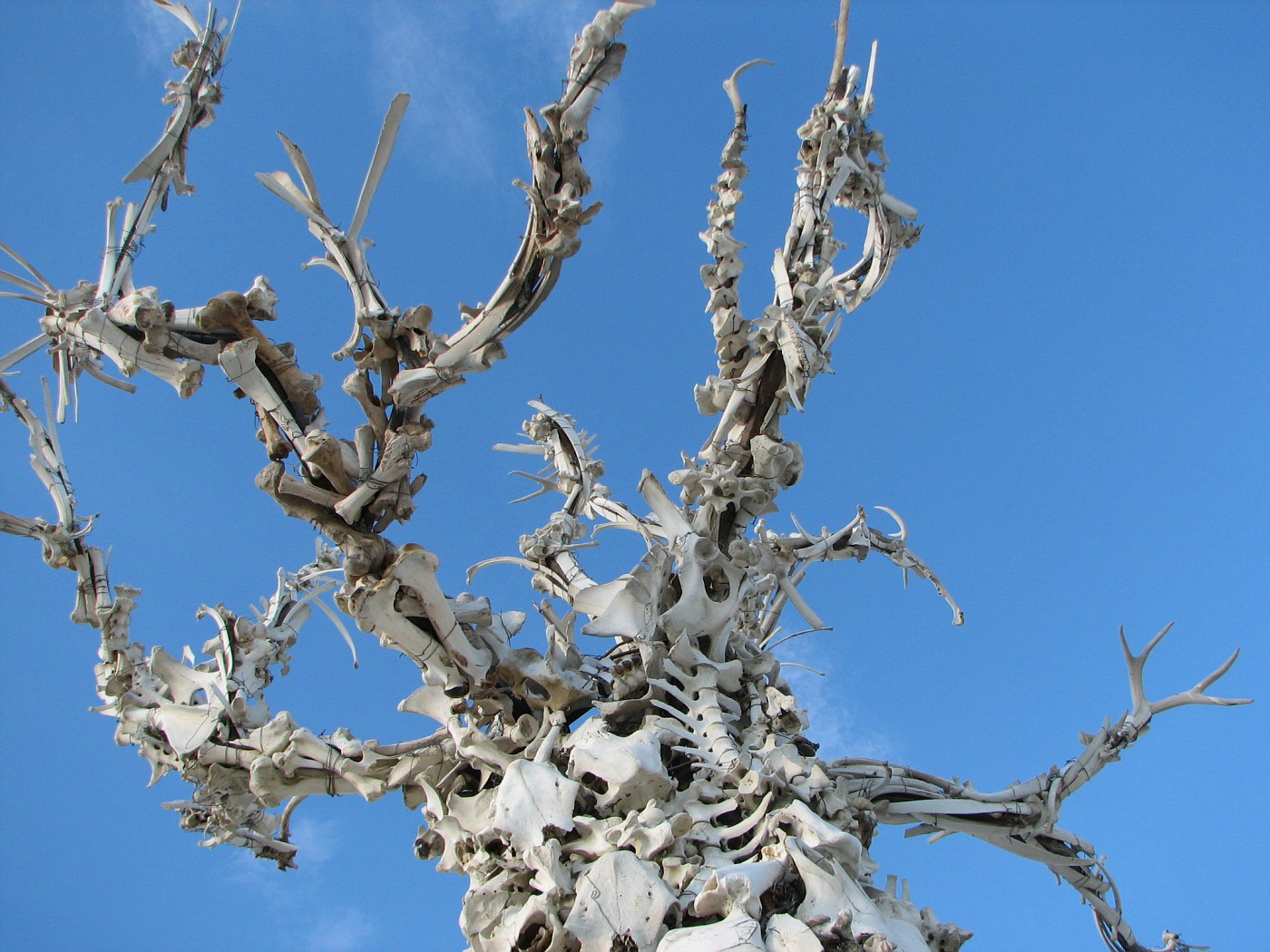 Detail of the Bone Tree