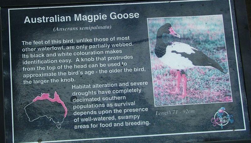 Australian Magpie Goose plaque