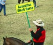 Australian Stock Horse 001