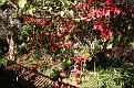 Ivydale Garden Polokwane (23)