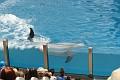 070417 SeaWorld 0114