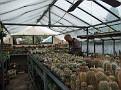 060. Bertus at Michal Svoboda his Cacti greenhouse