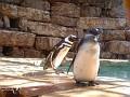 7  Penguins