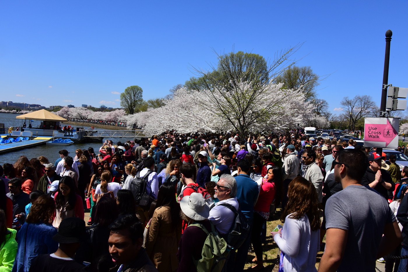 CherryBlossomFest APR2015 438