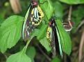 Butterfly World Butterflies Close Up07