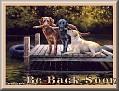 dogshavingfuntjcBe Back Soon