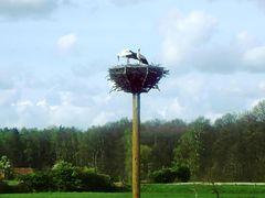 Das Nest wird für den Nachwuchs gerichtet