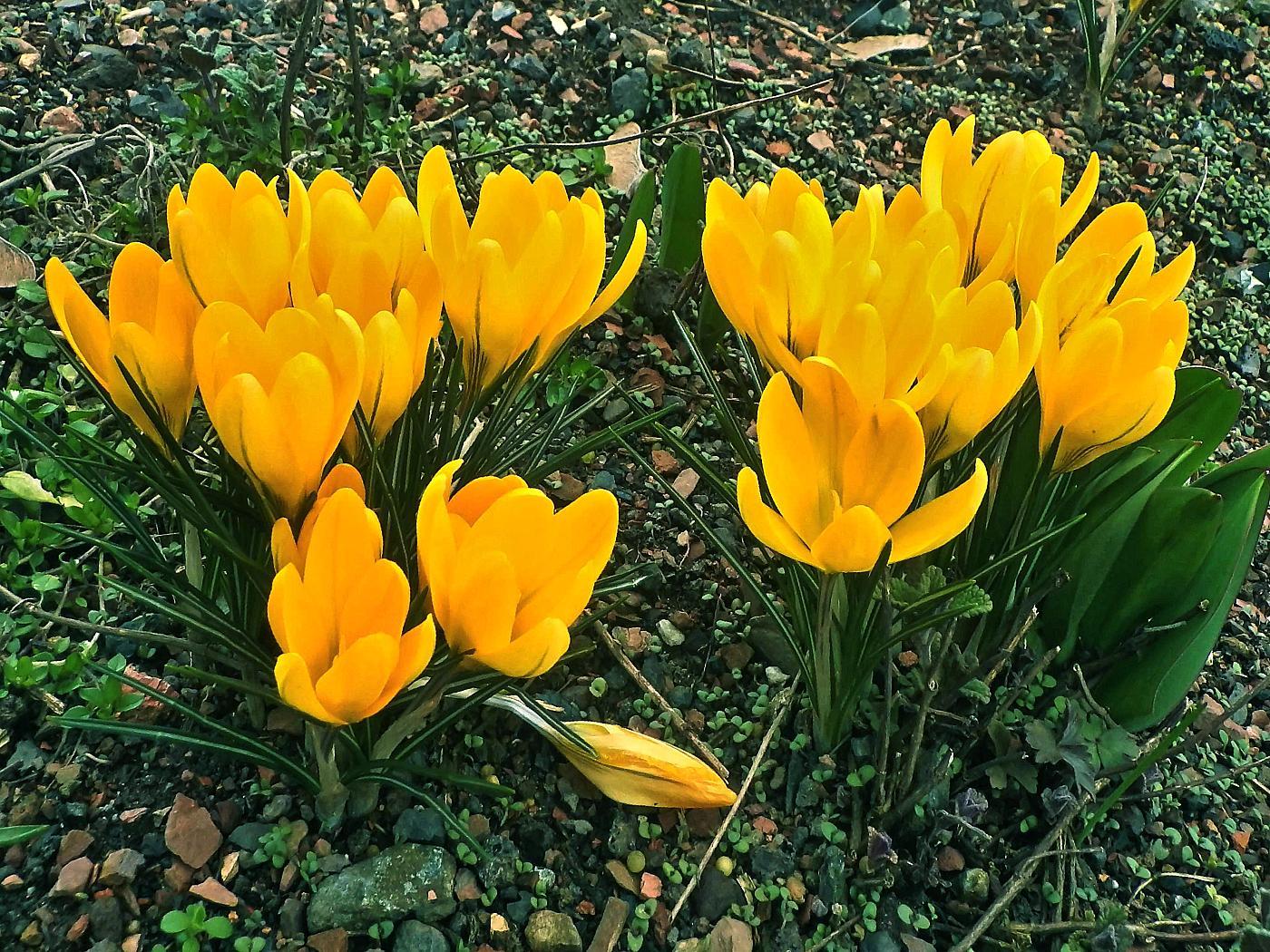 ... den Frühling locken