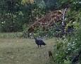 LB fledged on International Vulture Appreciation Day.