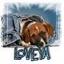 1LoveYa-blujeanpup-MC