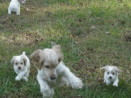 Mollee & Babies