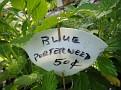 Plants Names DX7 171
