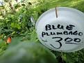 Plants Names DX7 193