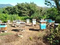 Honey Bee Hives in Mexico   Thank you Octavio Jimenez and your brother Isaac Jimenez in Mexico who tends to the bees