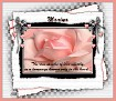 Marina-gailz-pink rose