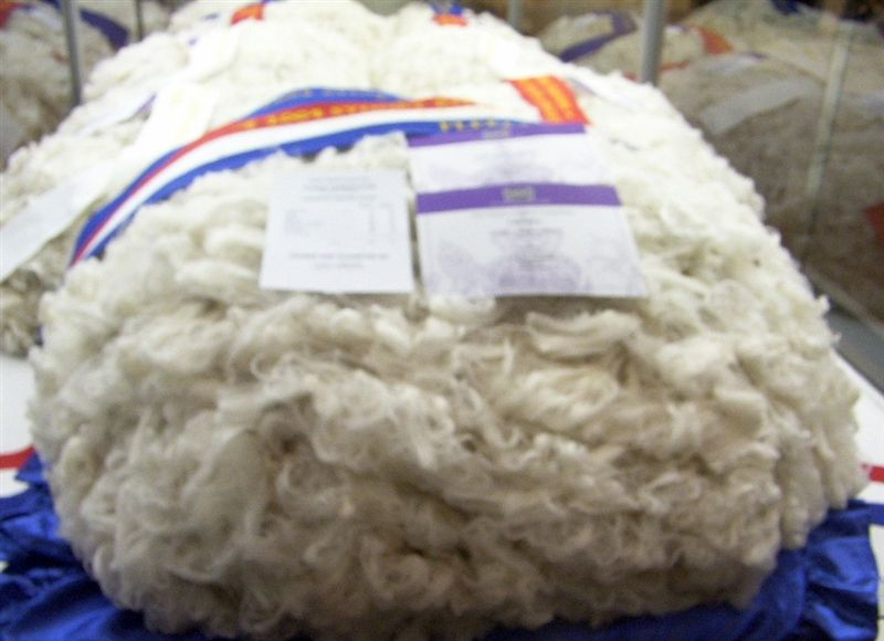 Medium Wool Fleece