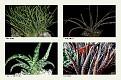 1 Aloe (3)