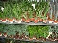 Agrifarm (1)