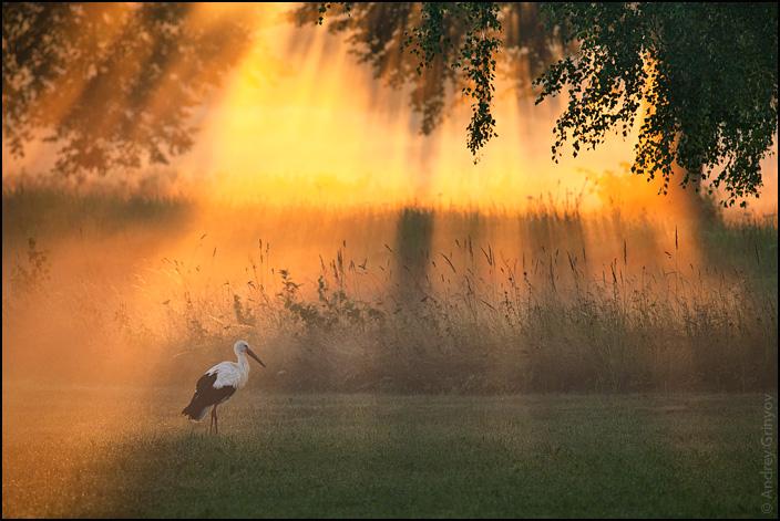 http://images57.fotki.com/v139/photos/1/880231/9966952/Rassvet021-vi.jpg