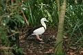 Birds Australia Zoo (30)