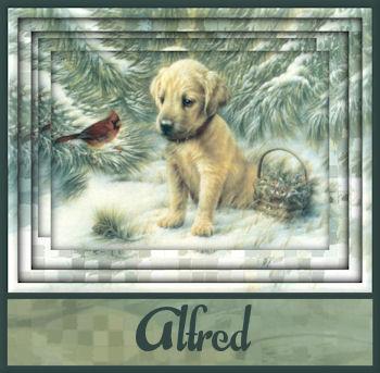 Winter10 8Alfred