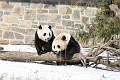 070216 Natl Zoo023