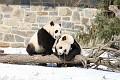 070216 Natl Zoo027