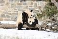 070216 Natl Zoo030