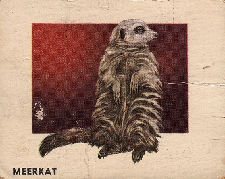 1951 Topps Animals of the World #115 (1)