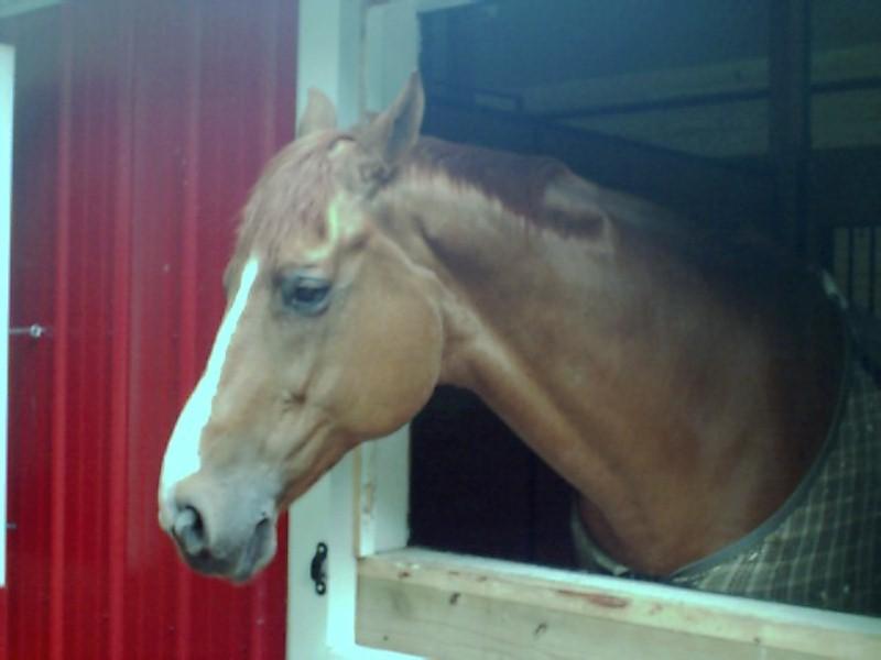 horse  may 27