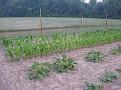 4 kinds of corn.