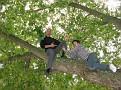 Hiromi, Soji and I Climbing the Maple Tree in my Driveway  (15)