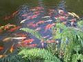 Morikami Japanese Gardens16