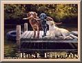 dogshavingfuntjcBest Friends