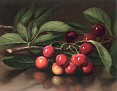 The Pomegranate [undated]