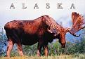 07- AK State Animal
