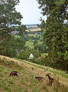 Ziegen über Schwalenberg