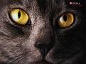 dog cat 06-1152