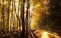 forest-wallpaper-1920x1200-021