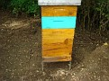 Honey Bee Hives in Mexico   Thank you Octavio Jimenez and your brother Isaac Jimenez in Mexico who tends to the bees  (19)